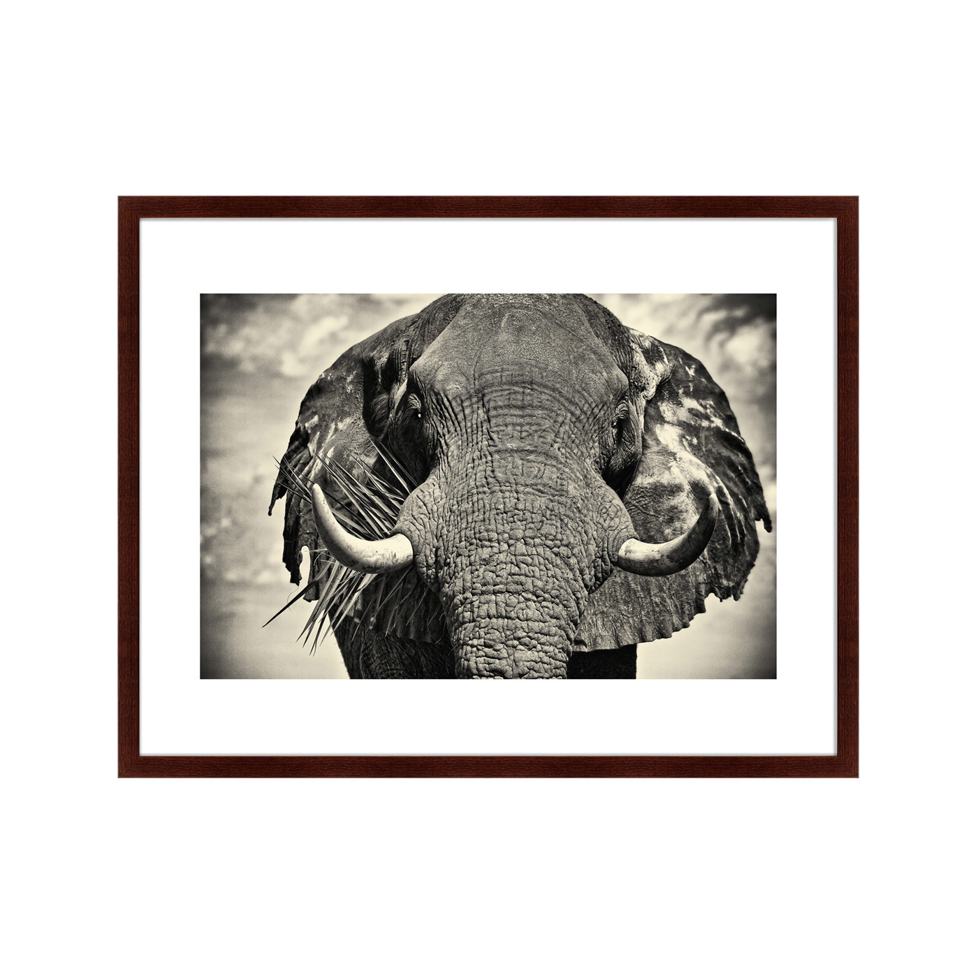{} Картины в Квартиру Картина Слон (79х100 см) картины в квартиру картина павлин 35х77 см