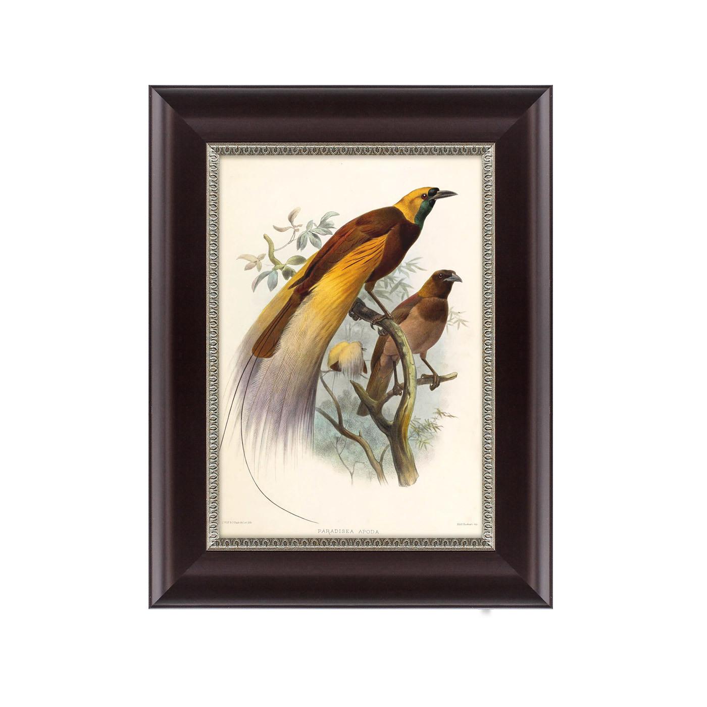 {} Картины в Квартиру Картина Большая Райская Птица (25х33 см) картины в квартиру картина etude 2 102х130 см