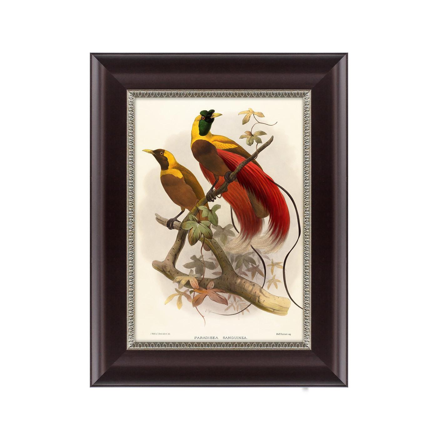 {} Картины в Квартиру Картина Красная Райская Птица (25х33 см) картины в квартиру картина etude 2 102х130 см