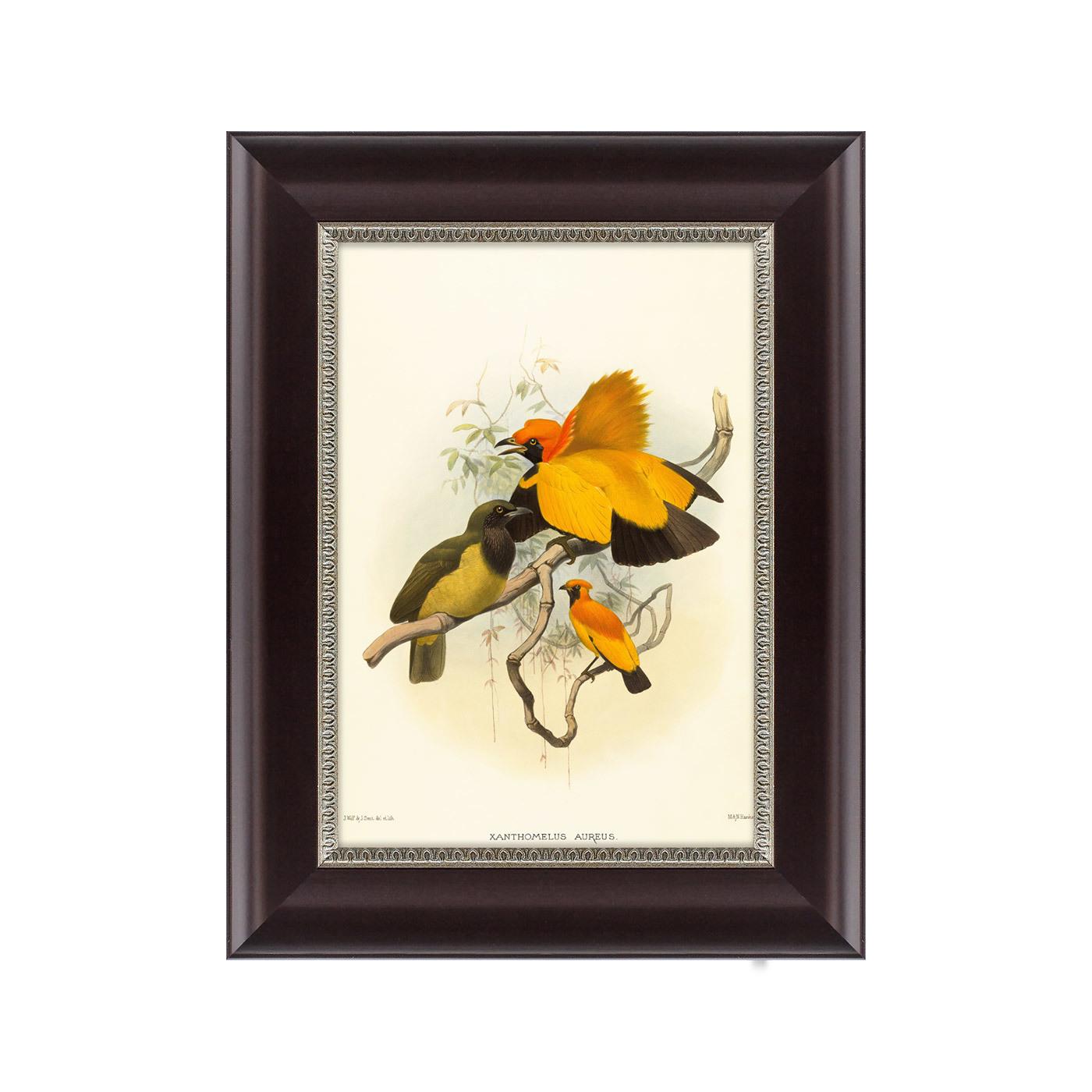 {} Картины в Квартиру Картина Золотые Райские Птицы (25х33 см) картины в квартиру картина райские птицы новой гвинеи 2 35х45 см