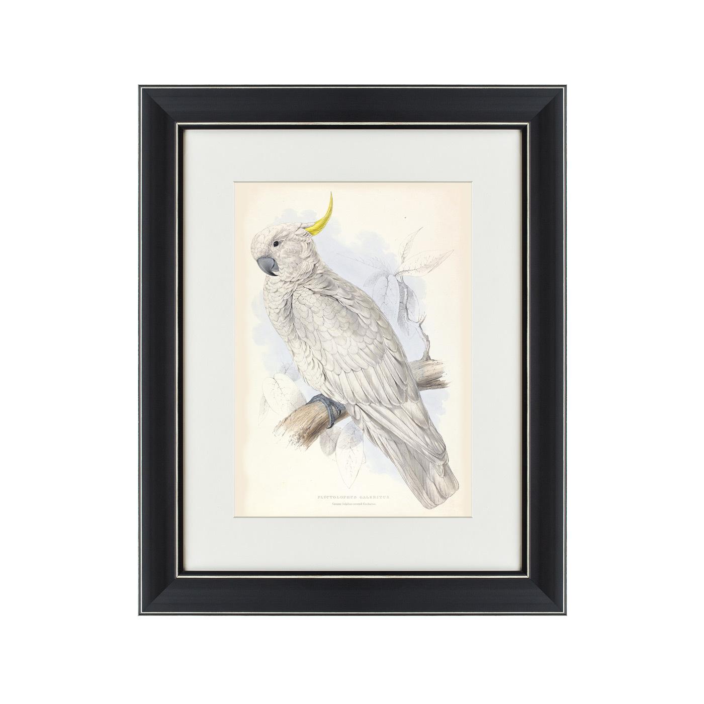 {} Картины в Квартиру Картина Белый Какаду (42х52 см) счетчики тепла в квартиру