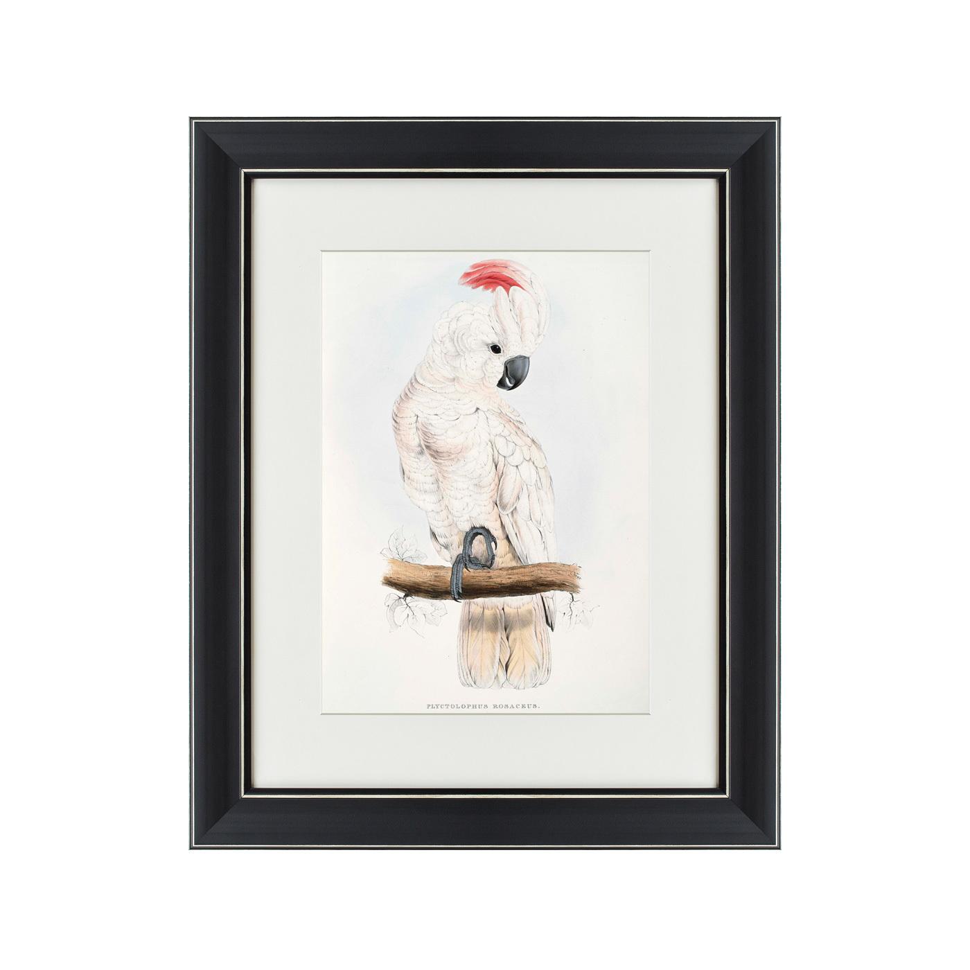 {} Картины в Квартиру Картина Молуккский Какаду (42х52 см) картины в квартиру картина sunrise 35х77 см