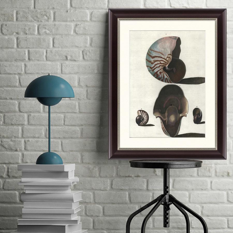 {} Картины в Квартиру Картина Наутилус (47х60 см) картины в квартиру картина цветная гравюра 2 47х60 см