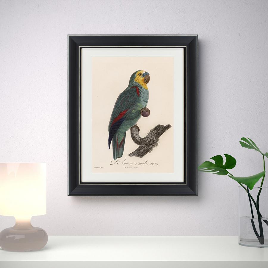 {} Картины в Квартиру Картина Попугай (42х52 см) картины в квартиру картина вода деревья утро 102х130 см