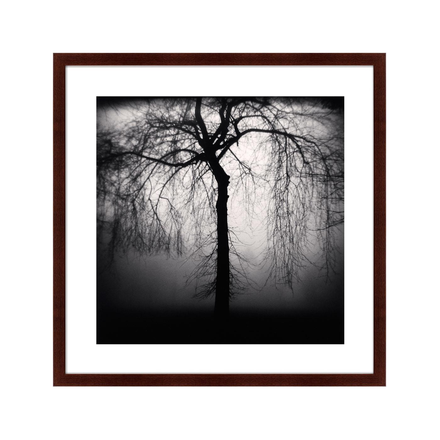 {} Картины в Квартиру Картина Sleeping Forest (79х79 см) картины в квартиру картина павлин 35х77 см
