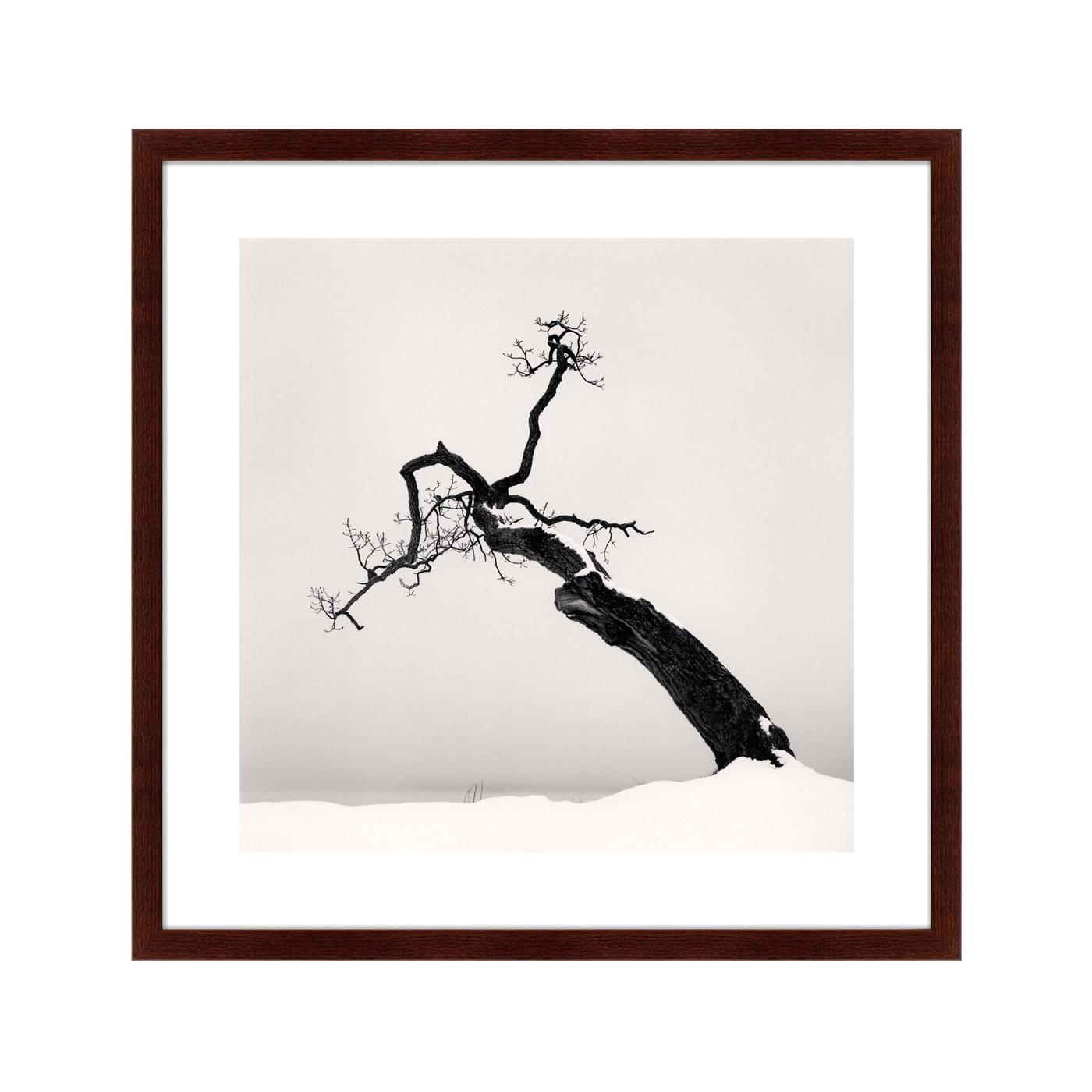 {} Картины в Квартиру Картина Snow No.1 (79х79 см) купить 1 комн квартиру королев юбилейный