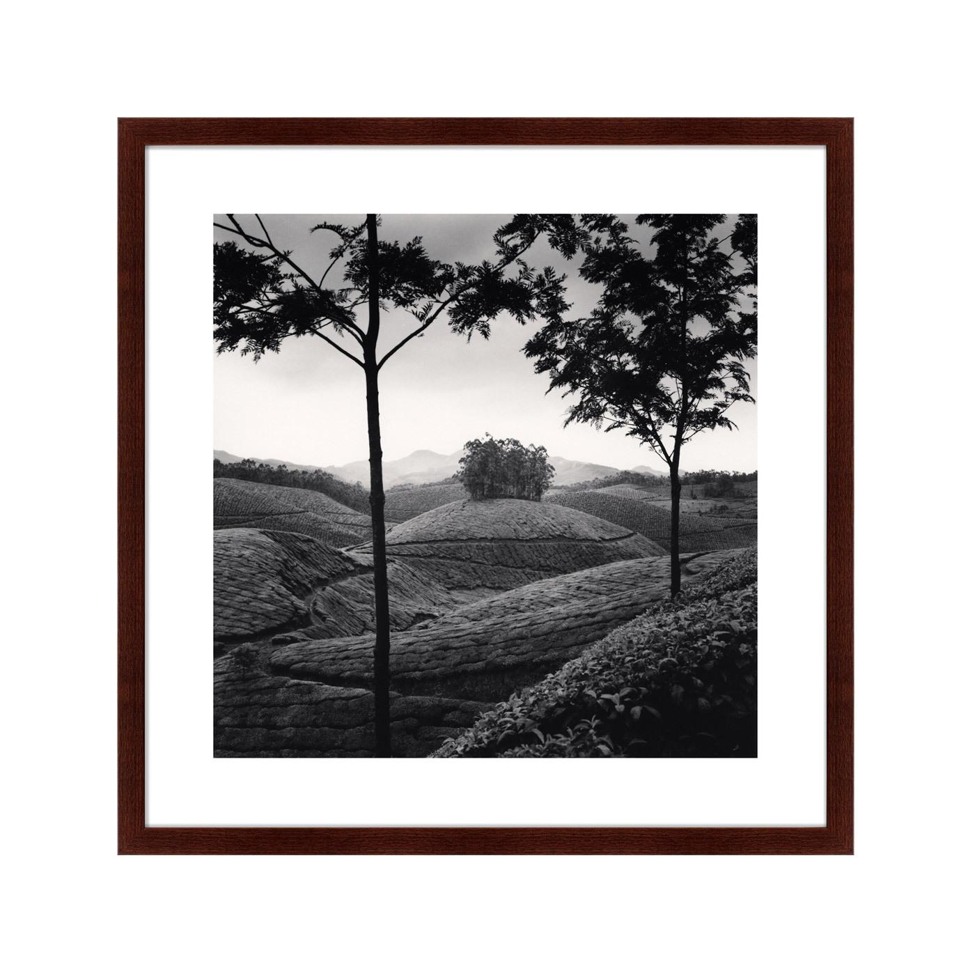 {} Картины в Квартиру Картина Tea Estates (79х79 см) 2комнатную квартиру в колпино