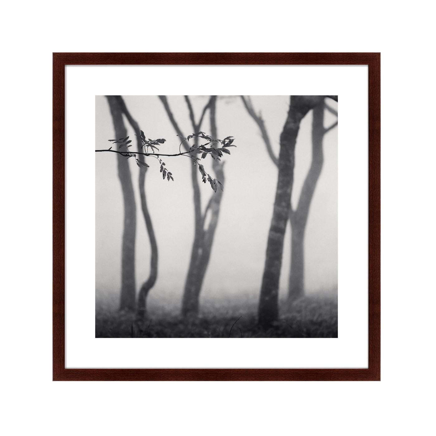 {} Картины в Квартиру Картина Tree (79х79 см) счетчики тепла в квартиру