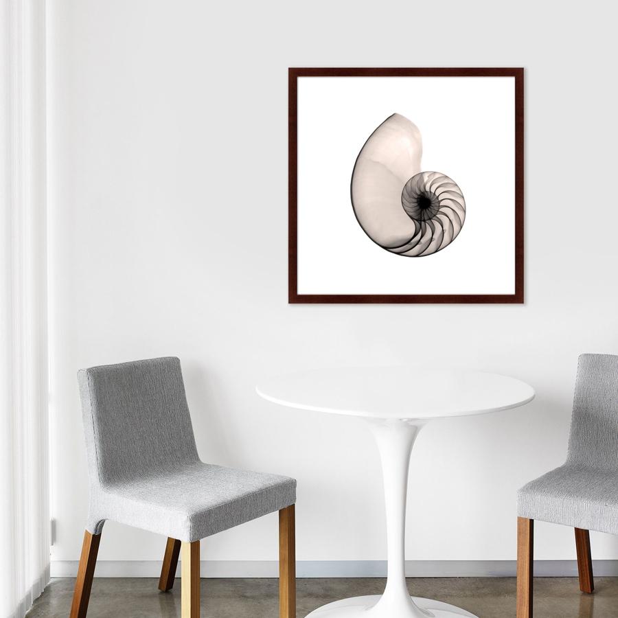 {} Картины в Квартиру Картина Наутилус В Рентгене (79х79 см) картины в квартиру картина sunrise 35х77 см