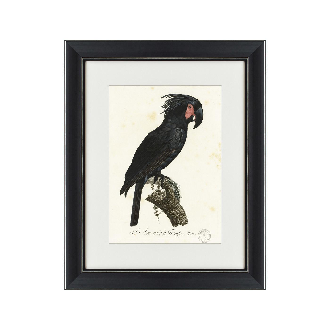 {} Картины в Квартиру Картина Чёрный Какаду (42х52 см) картины в квартиру картина sunrise 35х77 см