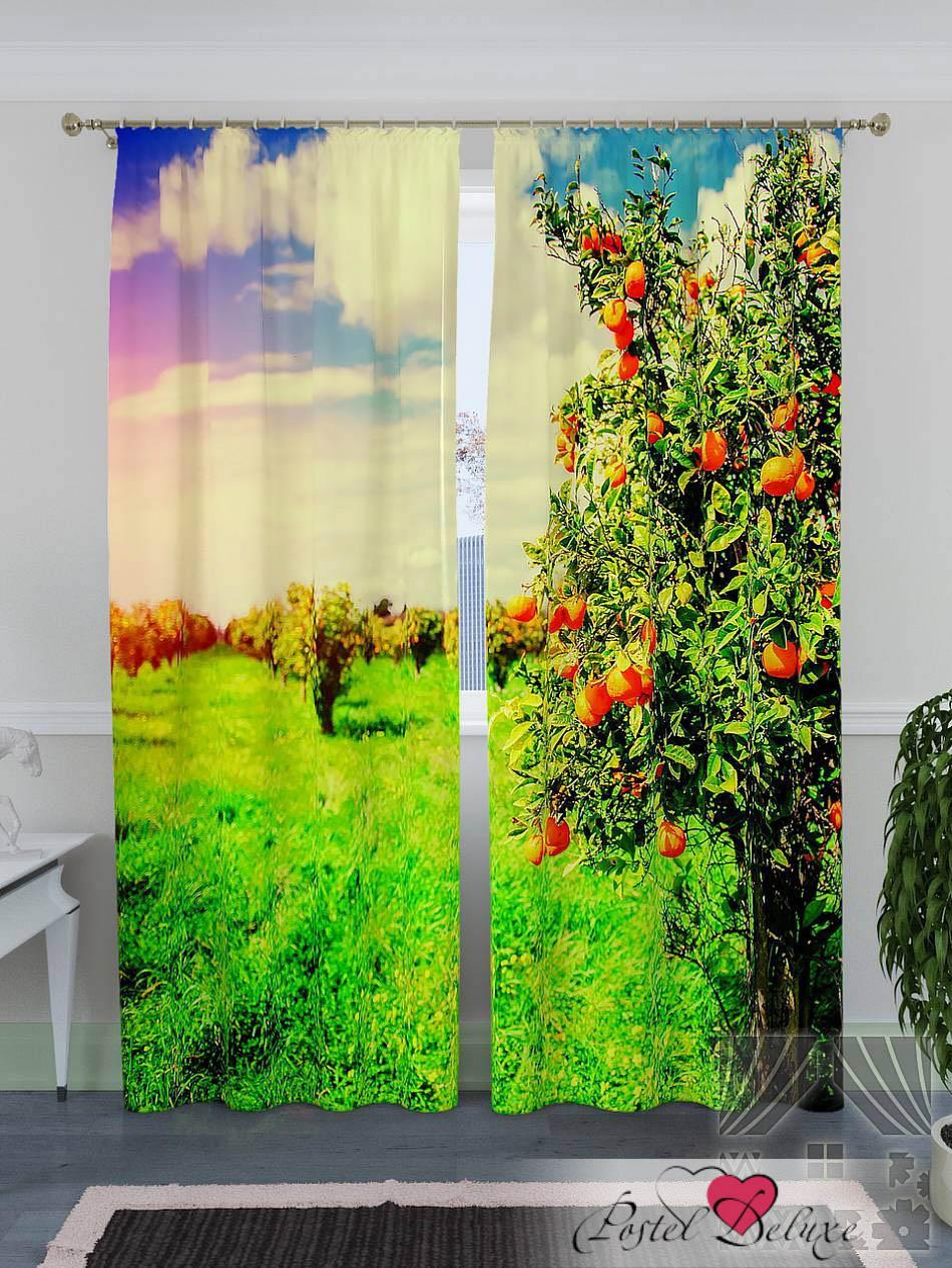 Шторы ТомДом Фотошторы Плантации Апельсиновых Деревьев